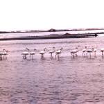 Walvis Bay in Namibia