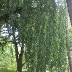 Botanical Garden Munich 2013