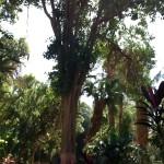 جزيرة النباتات  درة أسوان